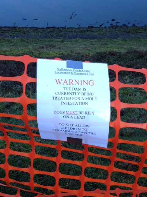Unusual sign on the dam - mole infestation!